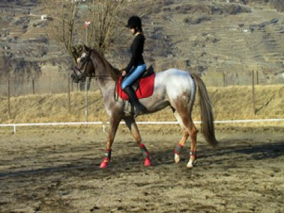 Centro Ippico Valtellina Horses Passeggiate a Cavallo
