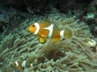pesci nei fondali
