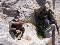 Wall of rock