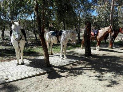 Noe Equitazione
