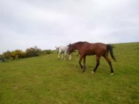 Cavalli liberi e felici