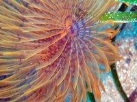 Flora marina suggestiva