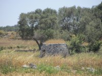 Trulli of the Apulian landscape