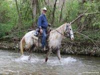 A cavallo sul fiume