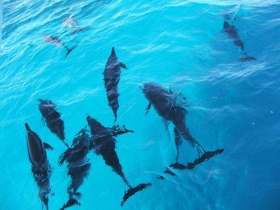 Diving Center Gallipoli Dromia Sub Escursione in Barca