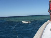 Crociere e immersioni nel Mar Rosso.JPG