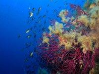 Primavere subacquee