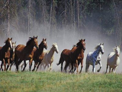 Maneggio Top Ranch