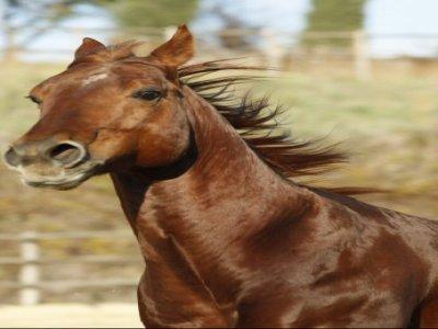 Selva Nera Quarter Horses