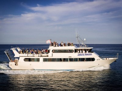 Motonave Adriatic Princess III Whale Watching
