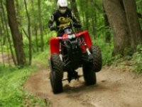 Nel bosco in quad