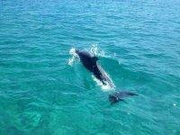 Naviga con i delfini