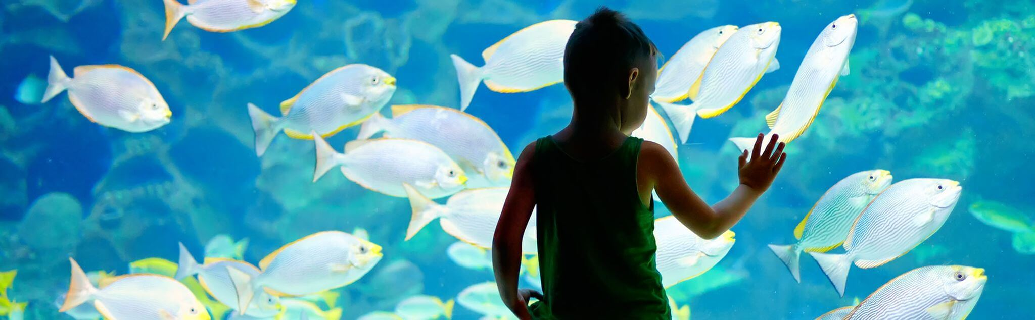 Aquarium a Italia
