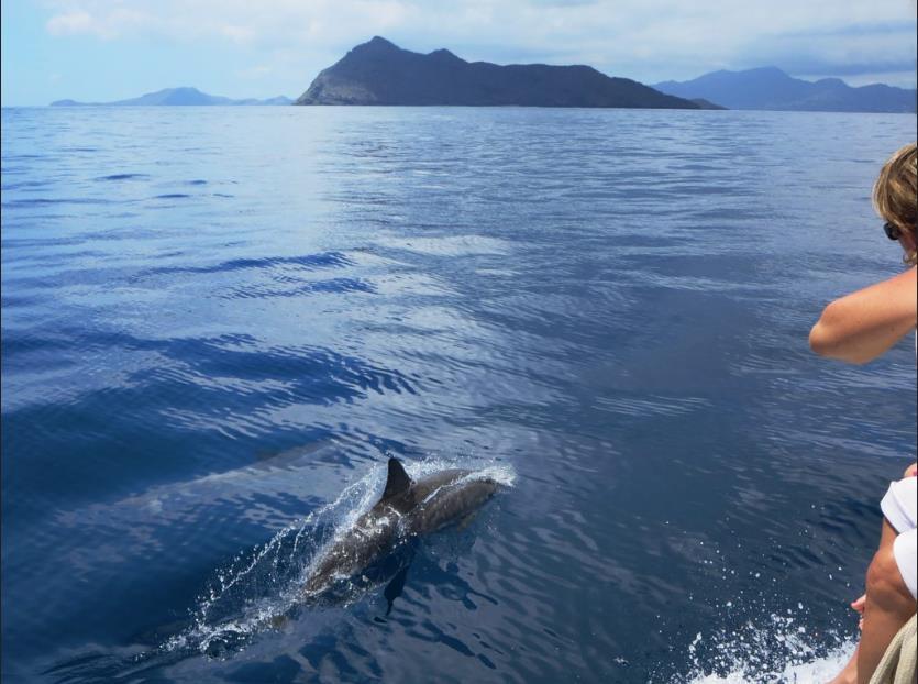 Conoscete l'importanza e la bellezza dell'ecosistema marino dei cetacei