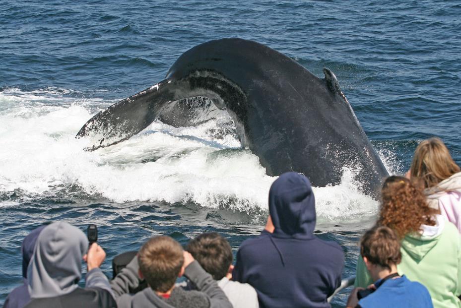 A pranzo con le balene