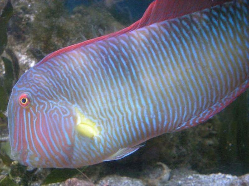 Conoscere nuove specie di pesci