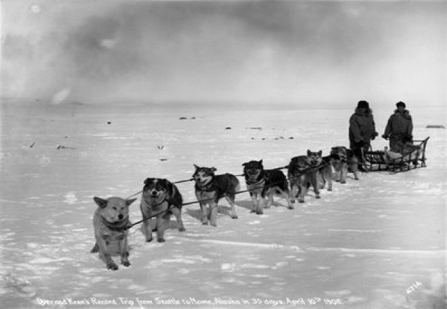 Trainati da un gruppo di cani
