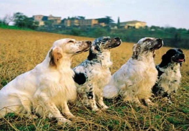cani da caccia