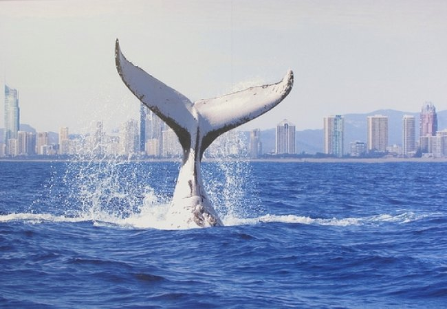 Balena bianca